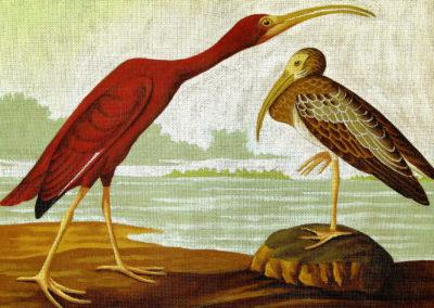 Audubon's Scarlet Ibis